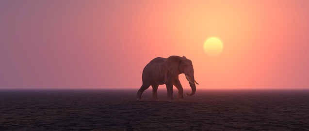 Solitude「Lonely elephant walking in barren landscape」:スマホ壁紙(18)