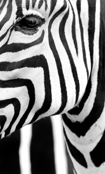 Carrot「Taronga Zoo Animals Beat The Heat With Cold Treats」:写真・画像(9)[壁紙.com]