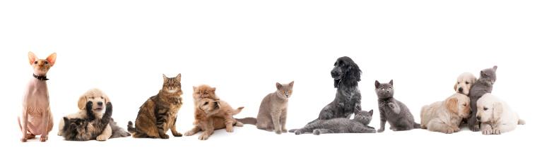 Ugliness「group of pets」:スマホ壁紙(0)