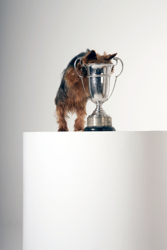 Nausea「Dog looking inside a silver trophy」:スマホ壁紙(12)