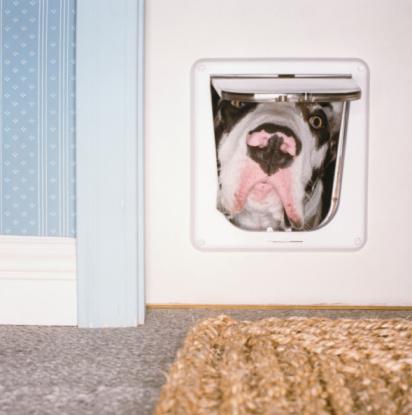 Staring「Dog Looking Through Cat Flap」:スマホ壁紙(5)