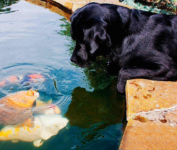 Dog Looking At Fish In The Water:スマホ壁紙(壁紙.com)