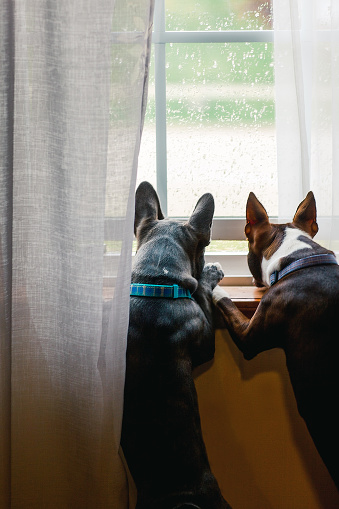 Personal Perspective「dog looking out of window on a rainy day」:スマホ壁紙(4)