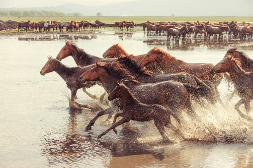 Stallion「Anatolian Wild Horses」:スマホ壁紙(5)