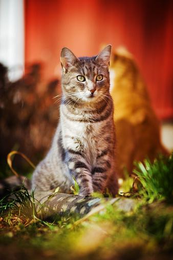 Mixed-Breed Cat「Cat outdoors」:スマホ壁紙(3)