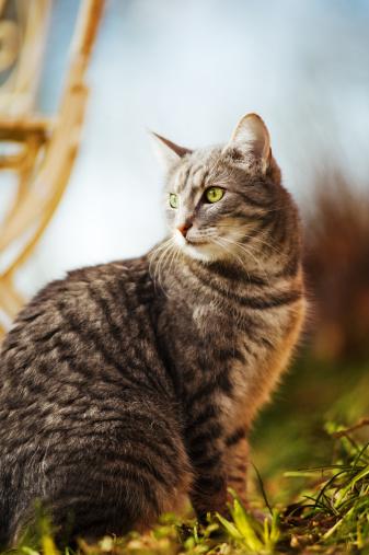 Mixed-Breed Cat「Cat outdoors」:スマホ壁紙(18)