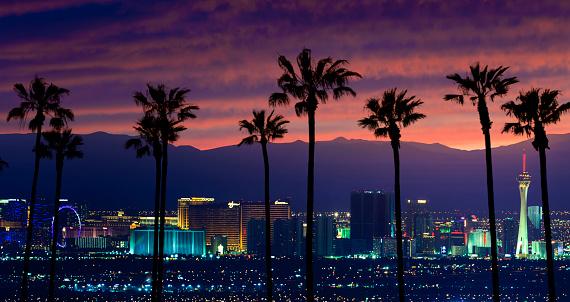ヤシ「ラスベガス Vegas  」:スマホ壁紙(0)