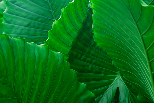Frond「Green palm leaves」:スマホ壁紙(19)
