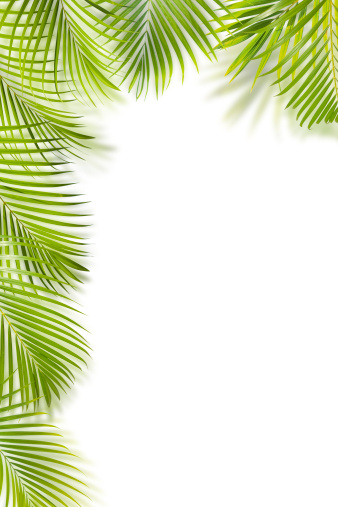 Frond「Green palm leaf frame isolated on white with copy space」:スマホ壁紙(2)