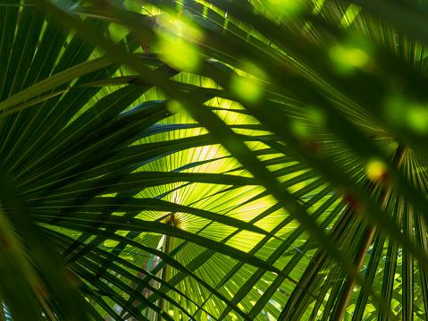 Focus On Background「Green palm fronds」:スマホ壁紙(19)