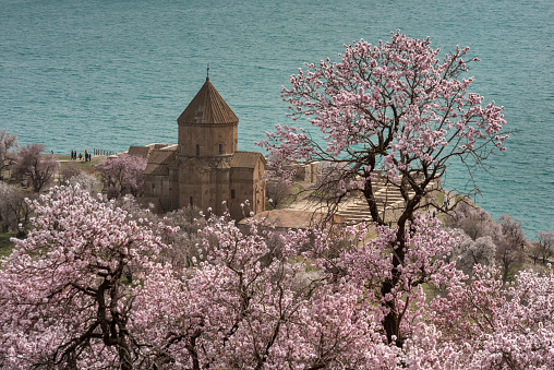 Akdamar Island「Distant image of Akdamar church and pink almond treet in spring, Lake Van, Eastern Turkey」:スマホ壁紙(11)