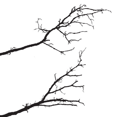 Growth「vector silhouette of the branch tree on white background」:スマホ壁紙(8)