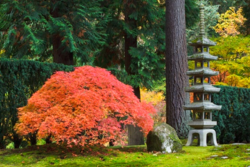 Japanese Maple「Portland Japanese Garden, Portland, Oregon, Usa」:スマホ壁紙(11)
