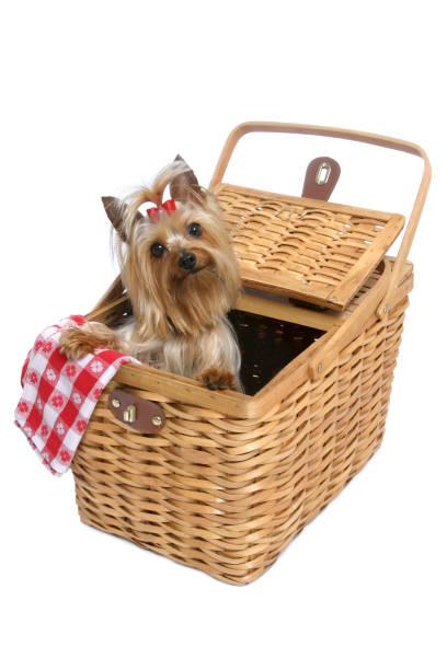 Doggy Picnic Series:スマホ壁紙(壁紙.com)