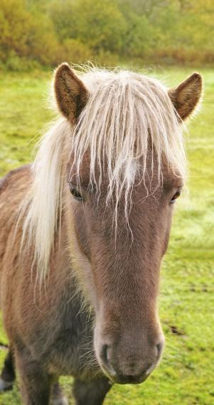 Stallion「It's a horse's life」:スマホ壁紙(12)