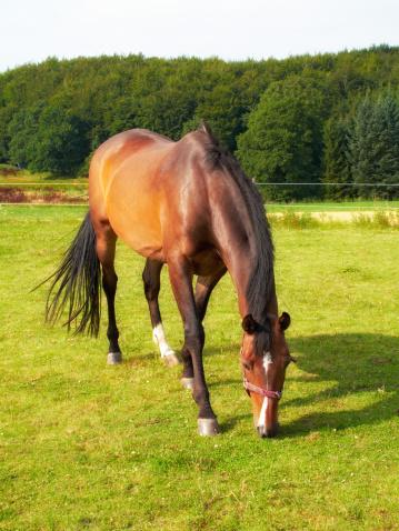 Stallion「It's a horse's life」:スマホ壁紙(10)