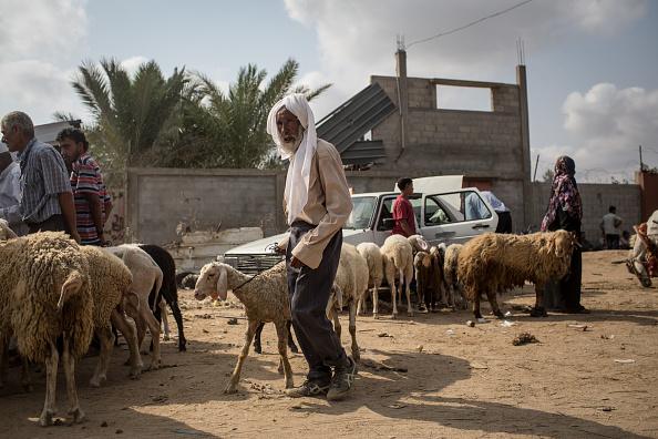 Economy「Electricity Cuts Deepen Gaza Crisis 10 Years After Israeli Blockade」:写真・画像(17)[壁紙.com]