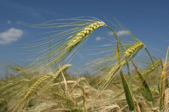 Barley「Barley」:写真・画像(18)[壁紙.com]
