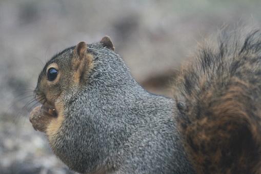 Tree Squirrel「Squirrel eating corn from bird feeder」:スマホ壁紙(12)