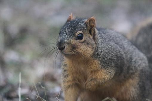 Tree Squirrel「Squirrel eating corn from bird feeder」:スマホ壁紙(14)