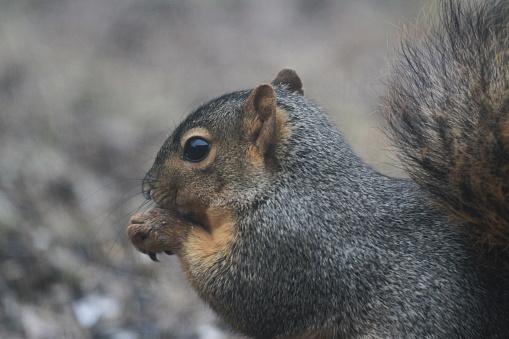 Tree Squirrel「Squirrel eating corn from bird feeder」:スマホ壁紙(13)