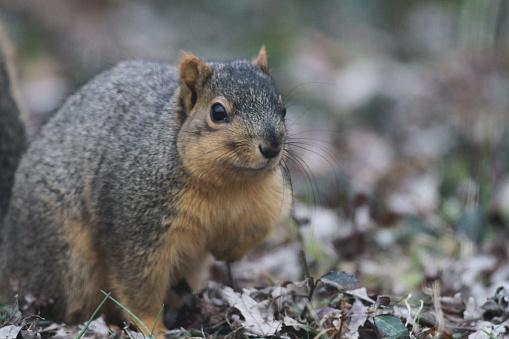 Tree Squirrel「Squirrel eating corn from bird feeder」:スマホ壁紙(15)