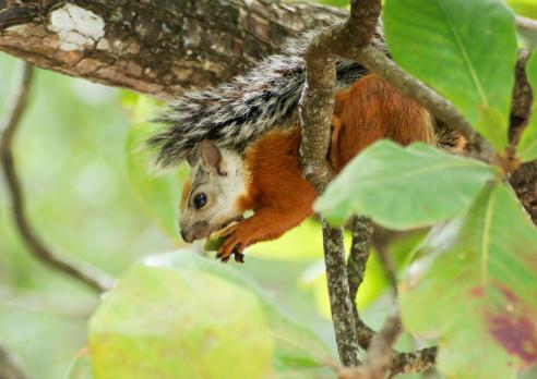 リス「squirrel eating almond」:スマホ壁紙(4)