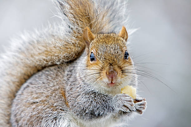 Squirrel Eating Banana, Hampstead, UK:スマホ壁紙(壁紙.com)