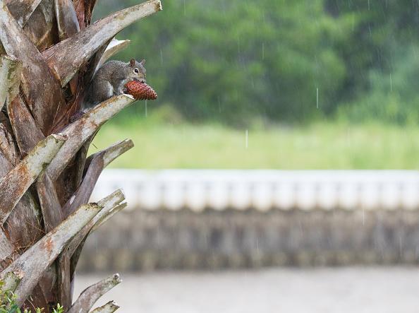 Squirrel「Powerful Hurricane Irma Slams Into Florida」:写真・画像(2)[壁紙.com]