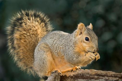 リス「squirrel eating at feeder」:スマホ壁紙(18)