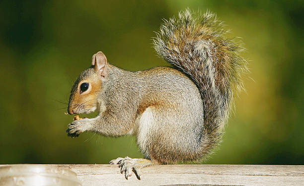 Eddy Hall Feeds Squirrels In St James Park:ニュース(壁紙.com)