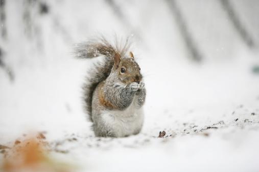 リス「Squirrel eating seeds.」:スマホ壁紙(10)