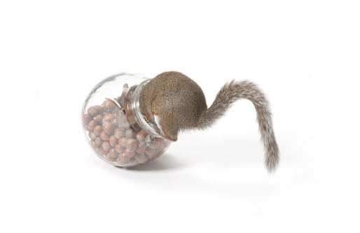 リス「Squirrel eating nuts from jar」:スマホ壁紙(3)