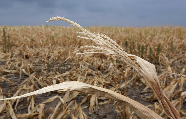 Kansas「Historic Drought Cripples Farms And Ranches In American West」:写真・画像(14)[壁紙.com]