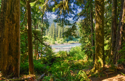 Hoh River Valley「Unique Scenery of the Hoh Rainforest in the Beautiful Olympic National Park in Western Washington State USA.」:スマホ壁紙(3)