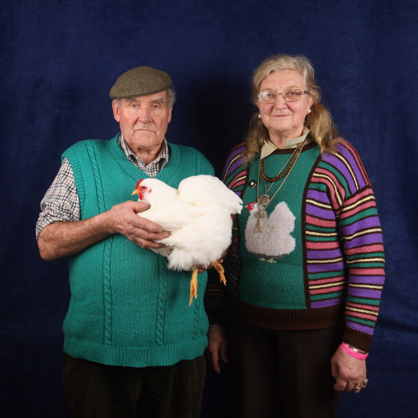 Hen「Enthusiasts Participate In The National Poultry Show」:写真・画像(18)[壁紙.com]