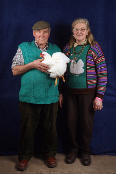 Hen「Enthusiasts Participate In The National Poultry Show」:写真・画像(17)[壁紙.com]