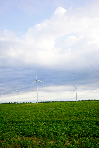 Bruce Peninsula「Three Wind Turbines In Field, Tiverton, Bruce Peninsula, Ontario」:スマホ壁紙(19)