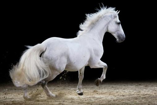 Horse「Galloping stallion」:スマホ壁紙(16)