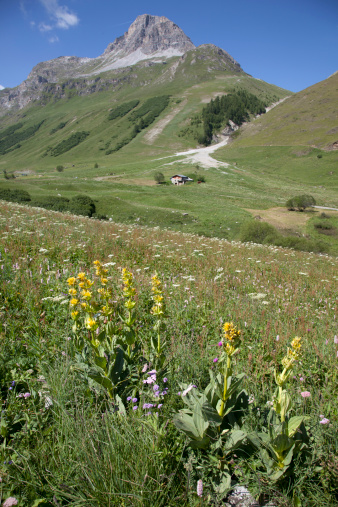 Val d'Isere「Val d'Isere, France in the summer, with a flowery meadow, a solitary chalet and a mountain peak behind.」:スマホ壁紙(9)