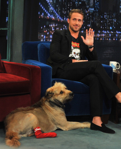 犬「Ryan Gosling Visits 'Late Night With Jimmy Fallon'  - July 20, 2011」:写真・画像(7)[壁紙.com]