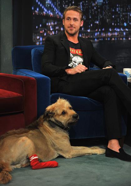 "animal「Ryan Gosling Visits ""Late Night With Jimmy Fallon""  - July 20, 2011」:写真・画像(8)[壁紙.com]"