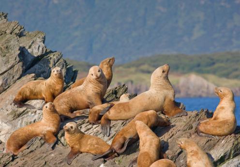 Katmai National Park「Steller sea lions」:スマホ壁紙(14)