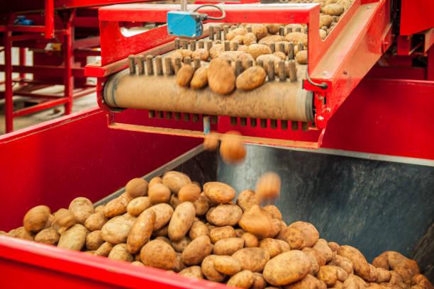 Raw potato processing machine in action:スマホ壁紙(壁紙.com)