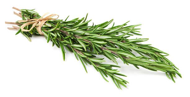 Fresh rosemary herb on white background:スマホ壁紙(壁紙.com)