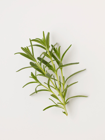 Rosemary「Fresh rosemary on white background」:スマホ壁紙(8)
