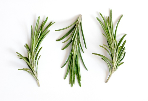 Rosemary「Fresh rosemary sprigs or Rosmarinus officinalis on white」:スマホ壁紙(12)