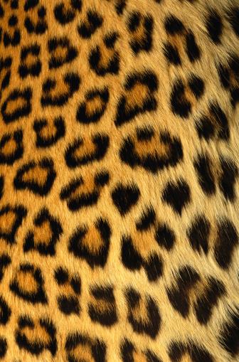 Leopard Print「Jaguar Fur」:スマホ壁紙(8)