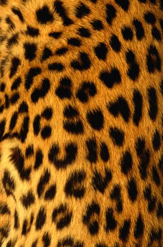 Leopard Print「Jaguar Fur」:スマホ壁紙(19)