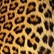 Leopard pattern壁紙の画像(壁紙.com)